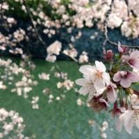 お得な春のキャンペーン継続中!
